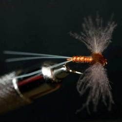CDC SPENT RAM 10