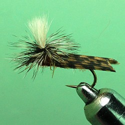 PARACHUTE SEDGE BROWN