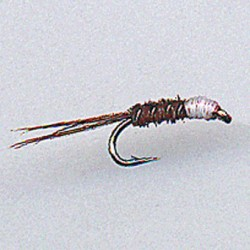 NYMPH RAM 31