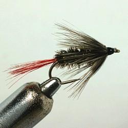 GREY HACKLE