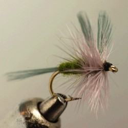 BLUE WING OLIVE BWO