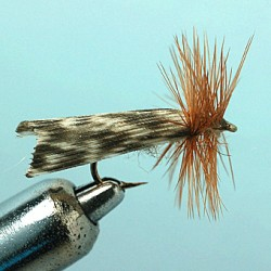 KING RIVERS CADDIS