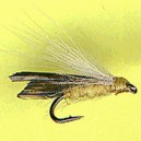 CDC SEDGE LIGHT