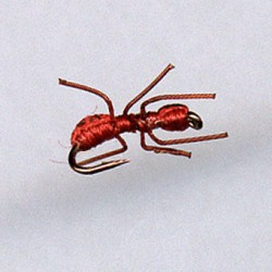 ANT RED FORM